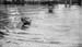 Gandhiji taking a dip in the sea at Cape Comorin, January 1934