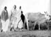 Gandhi on his daily walk, Wardha, 1934